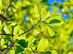 Вчені створили рослину, здатну поглинати з атмосфери в 20 разів більше СО2, Фото pixabay.com