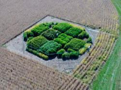 Учені підвищили врожайність культур на 40 %